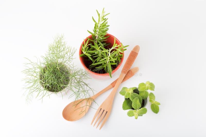 Herbes fraîches aromatiques image libre de droits