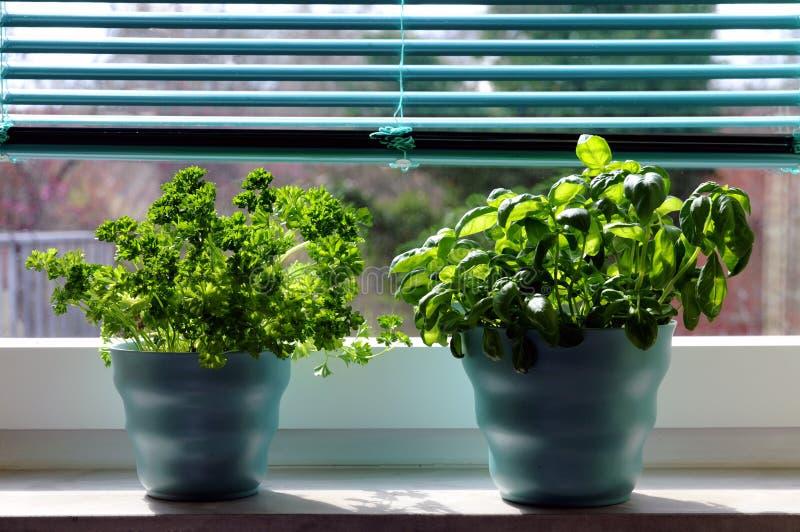 Herbes Fraîches (basilic Et Persil) Images libres de droits