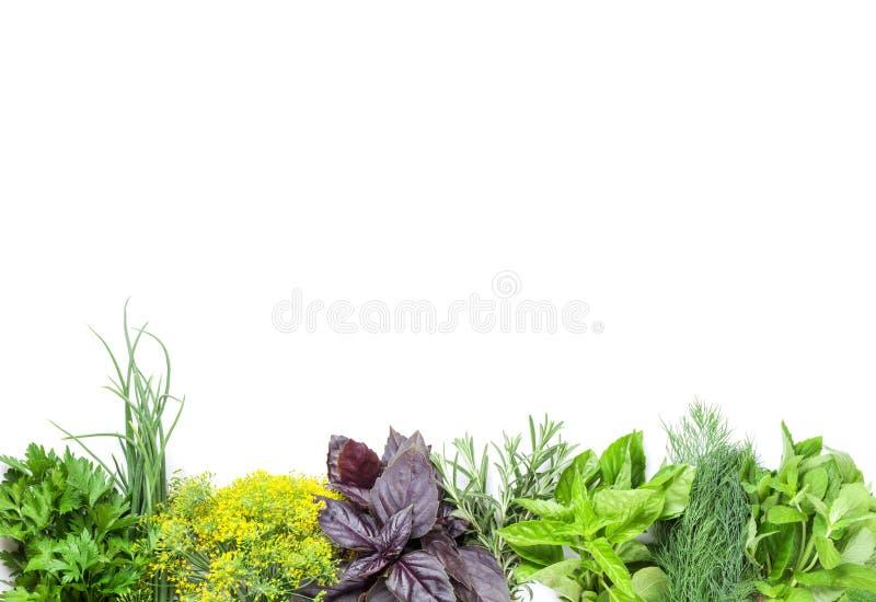 Herbes fraîches de jardin images libres de droits