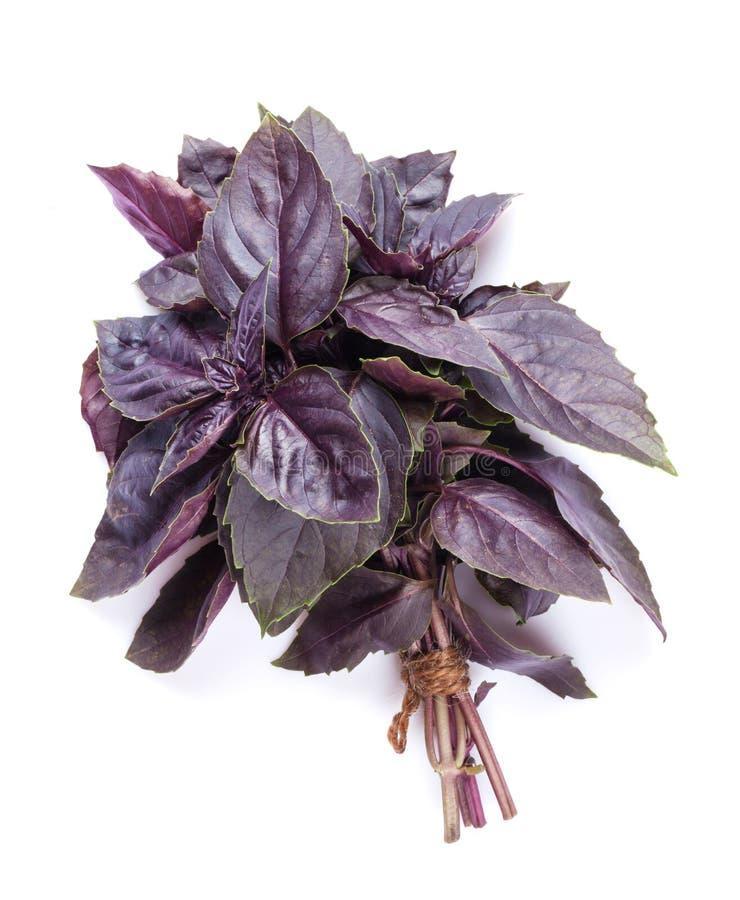 Herbes fraîches de jardin Basilic pourpré image libre de droits