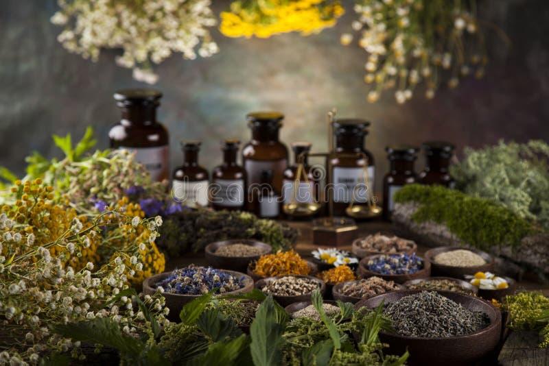 Herbes médicinales et curatives fraîches sur en bois photo stock