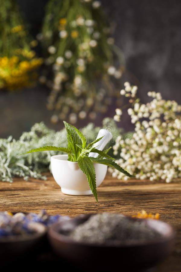 Herbes médicinales et curatives fraîches sur en bois image stock