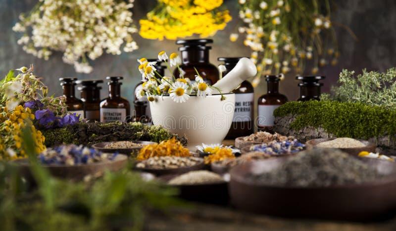 Herbes médicinales et curatives fraîches sur en bois photographie stock