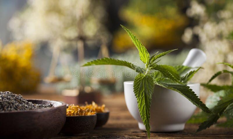 Herbes médicinales et curatives fraîches sur en bois photos libres de droits