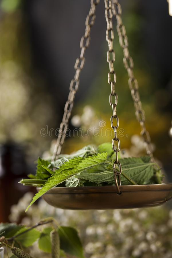 Herbes médicinales et curatives fraîches sur en bois images stock