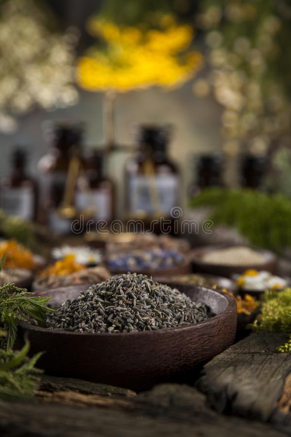 Herbes médicinales et curatives fraîches sur en bois photos stock
