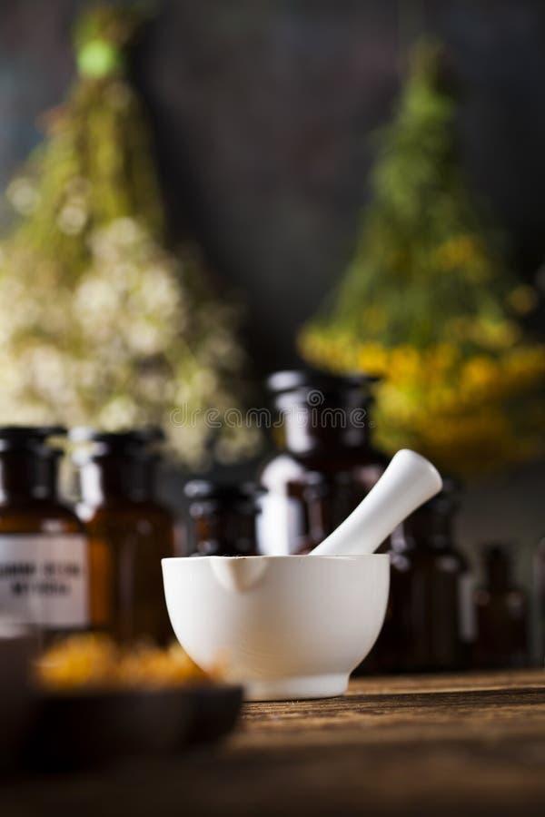 Herbes médicinales et curatives fraîches sur en bois photographie stock libre de droits