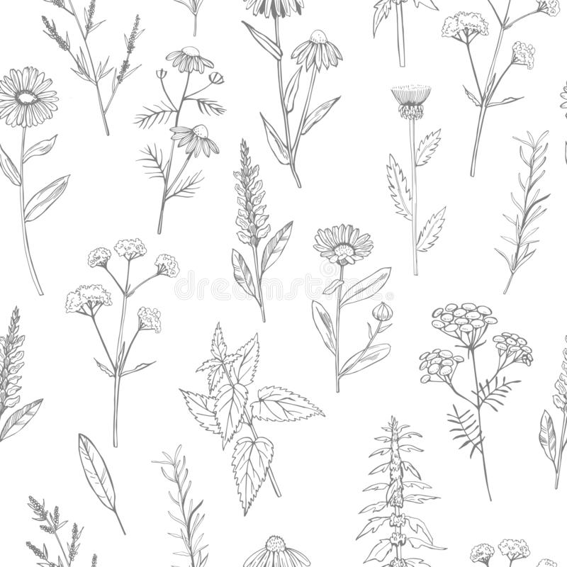 Herbes médicinales tirées par la main Configuration de vecteur illustration libre de droits