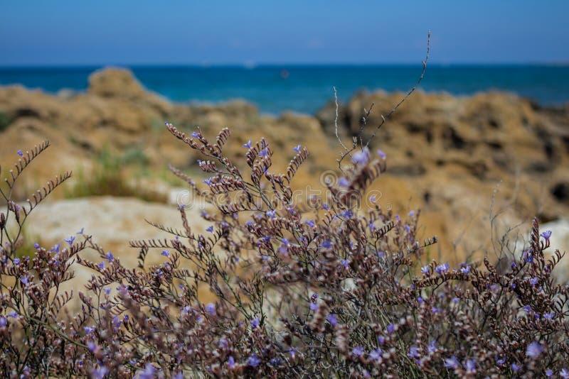 Herbes méditerranéennes sur le bord de la mer photographie stock