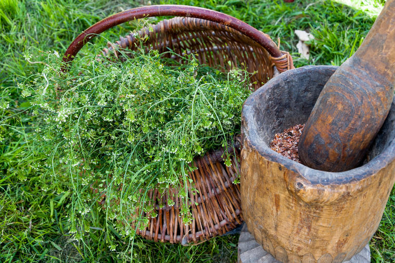 Herbes pour la vie saine photo libre de droits