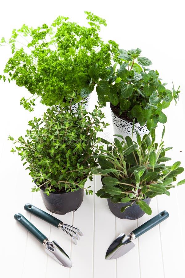 Herbes pour la plantation images stock