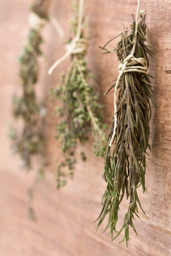 Herbes sèches photo stock