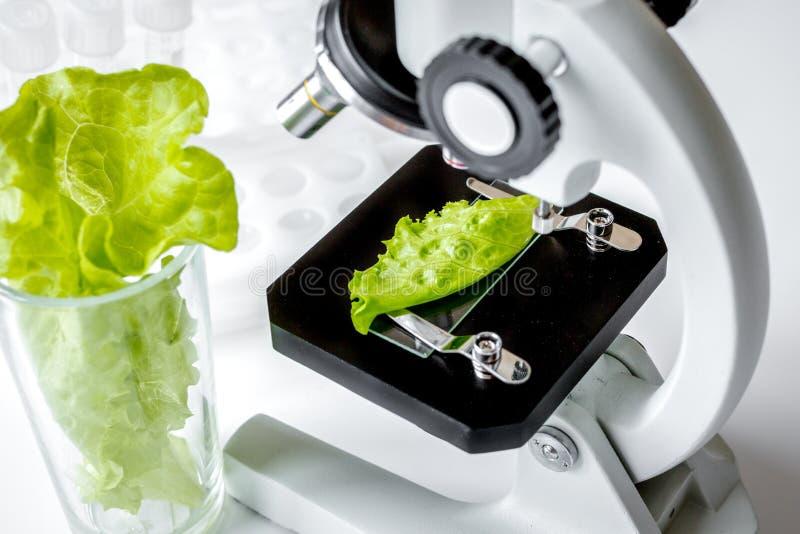 Herbes saines d'inspection des aliments de concept dans le laboratoire photos libres de droits