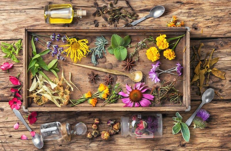 Herbes saines de Motley images libres de droits