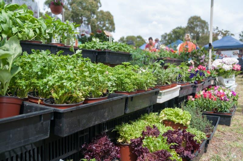 Herbes vertes dans des pots de fleur à vendre sur le marché d'agriculteurs photographie stock