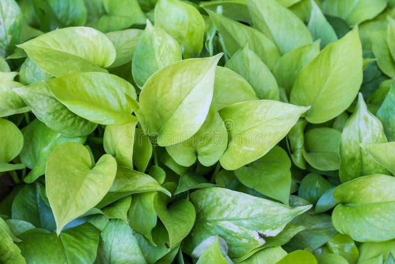 Herbes vertes de feuille photos stock