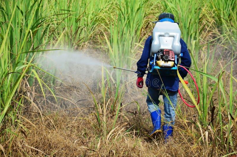 Herbicida de pulverização do fazendeiro no campo da cana-de-açúcar fotos de stock royalty free