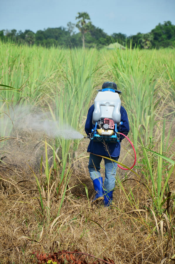 Herbicida de rociadura del granjero en campo de la caña de azúcar foto de archivo libre de regalías