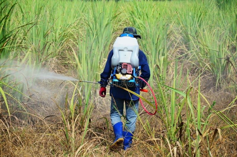 Herbicide de pulvérisation d'agriculteur sur le gisement de canne à sucre photographie stock libre de droits