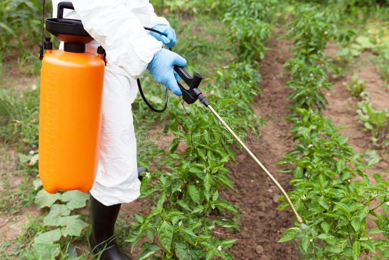 Herbicydu opryskiwanie Organicznie warzywa obraz stock