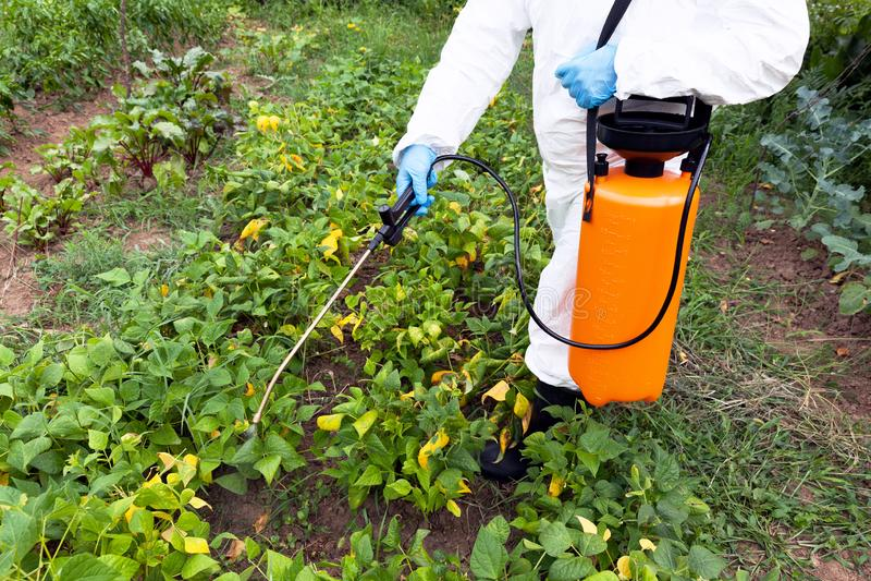 Herbicydu opryskiwanie Organicznie warzywa fotografia stock