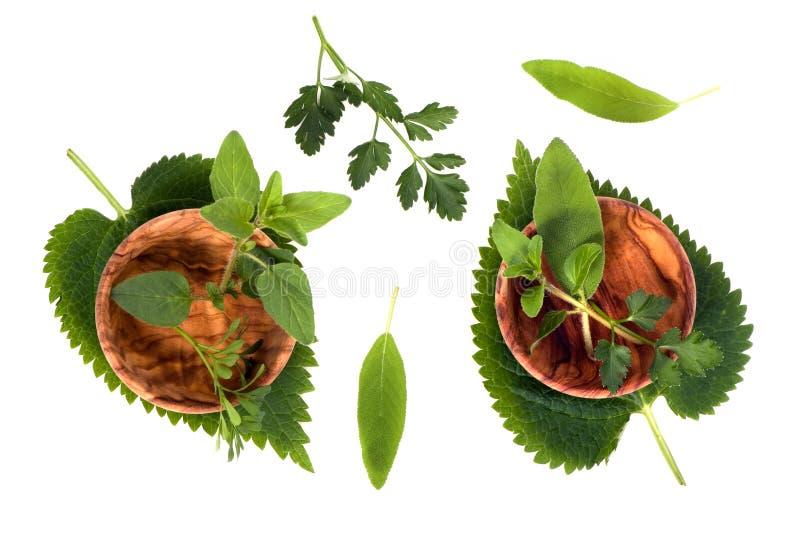 Download Herbs 002 stock image. Image of herbs, bowl, herb, leaf - 2130361