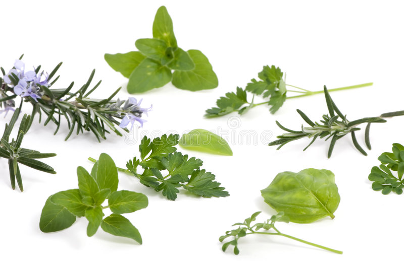 Download Herbs 005 stock image. Image of seasoning, spices, isolated - 2130381