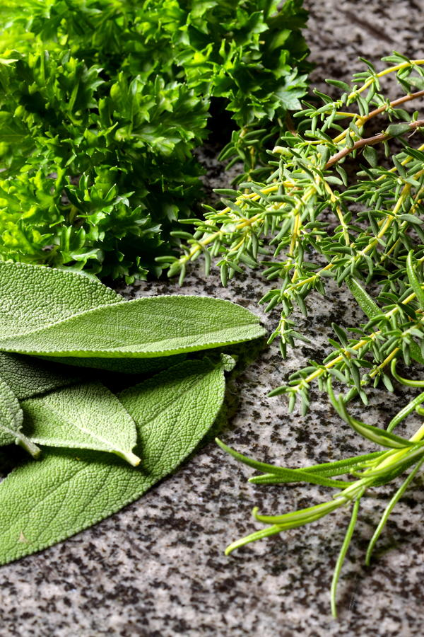 Download Herbs stock image. Image of parsley, leaves, plant, food - 20621749