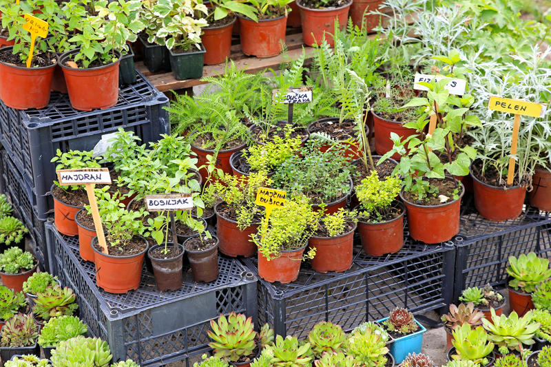 Download Herbs stock photo. Image of green, herbs, aromathic, plants - 26242620
