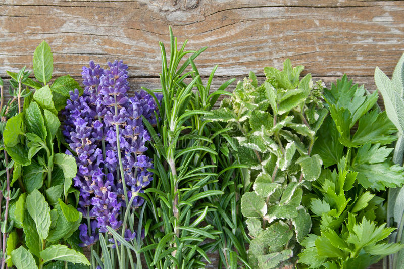 Download Herbs stock image. Image of balm, bouquet, spices, medicinal - 27894191