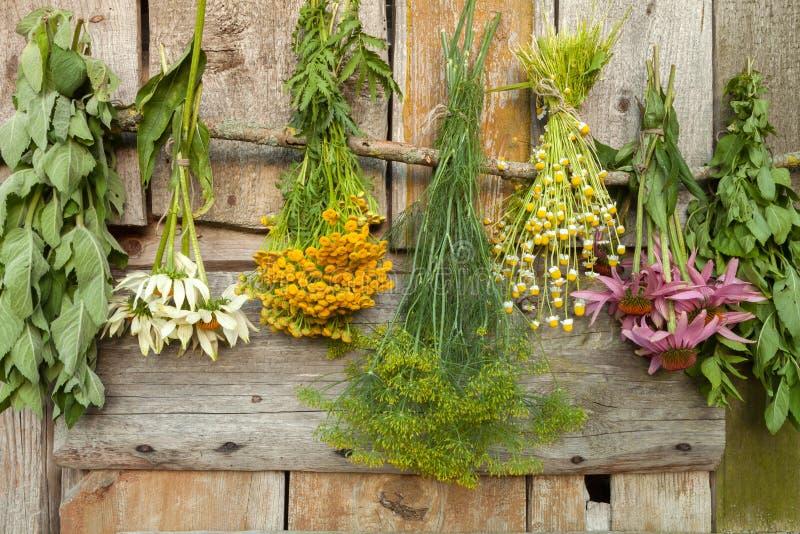 herbs foto de stock