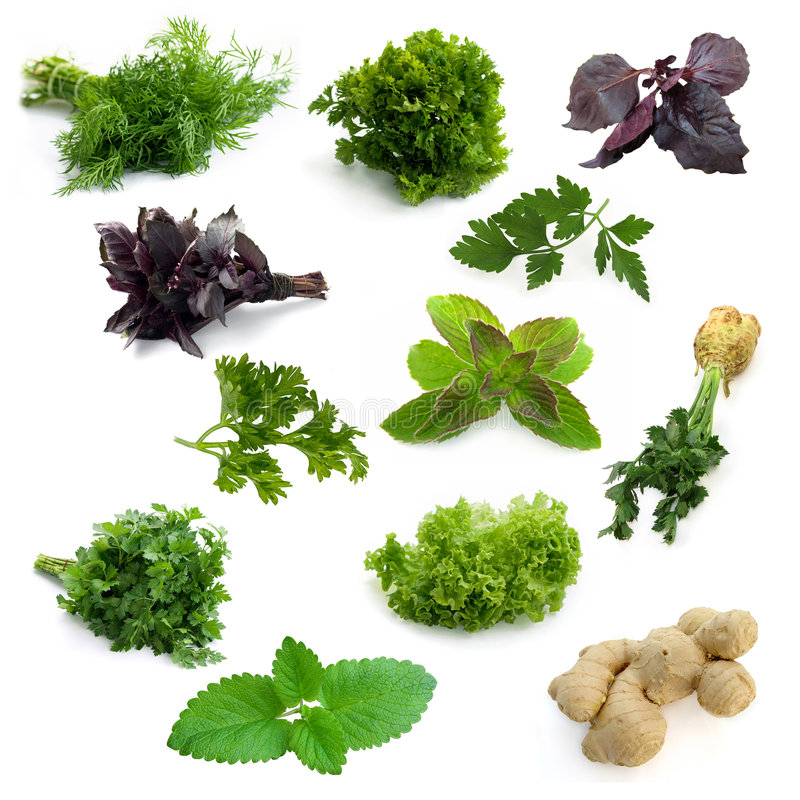 Herbs. Mix of different isolated aromatic herbs