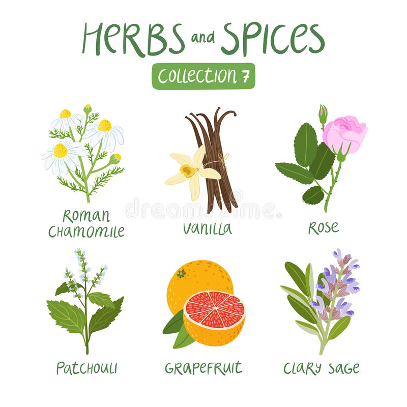 Free Herbs And Spices Collection 7 Stock Image - 59917191
