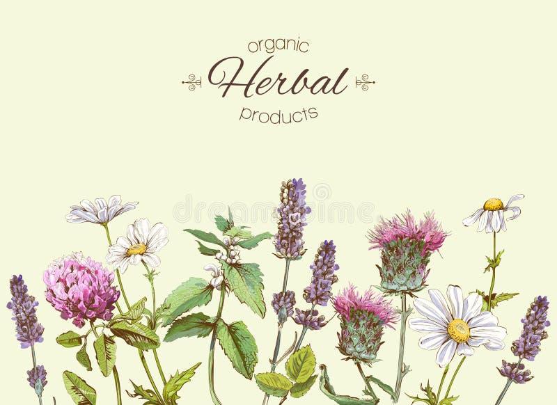 herbs banner stock illustration