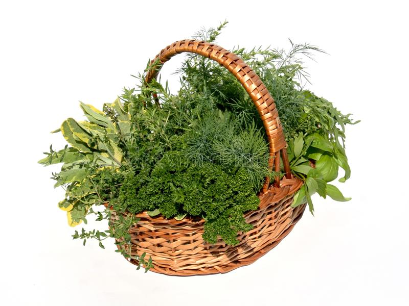 Herbs Basket royalty free stock photos