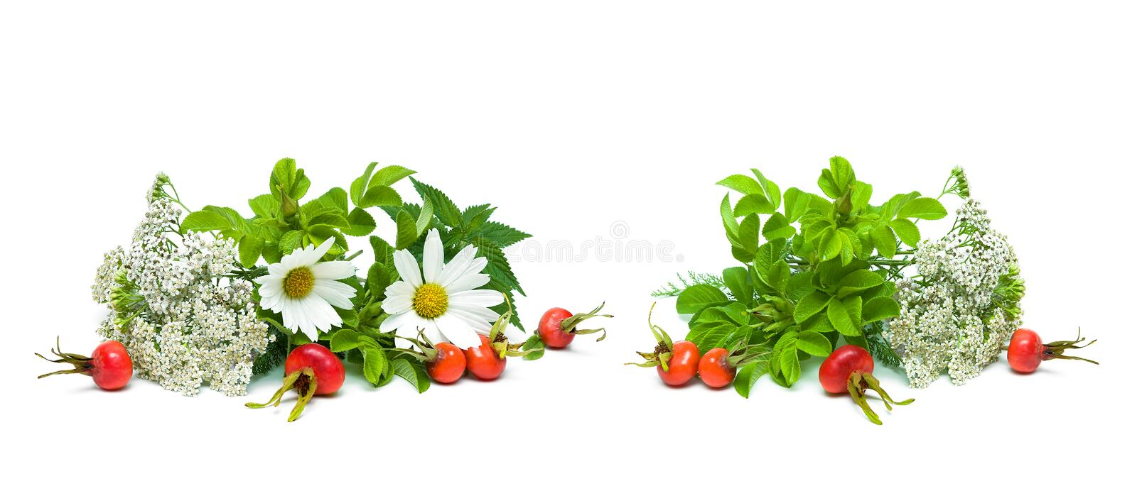 Herbs and berries of wild rose isolated on white background royalty free stock images