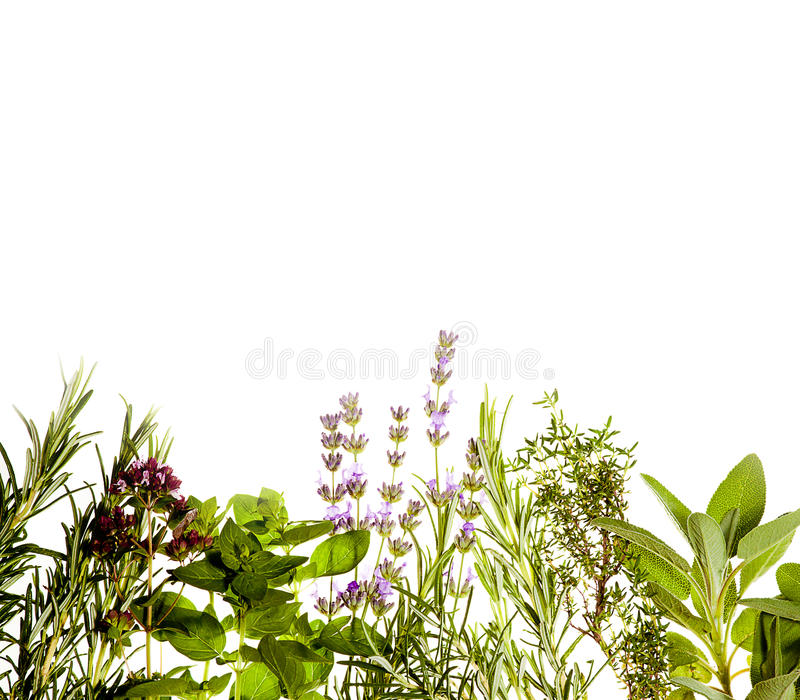 Herbs border on white stock images