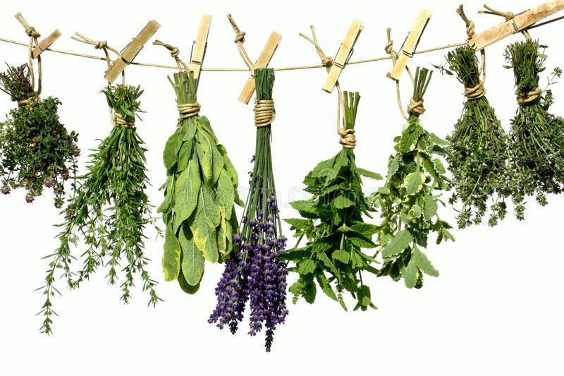 Herbs on clothes line stock photography