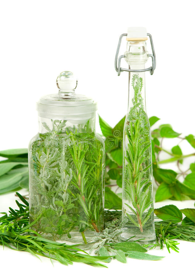 Herbs for cooking or medicine stock photos