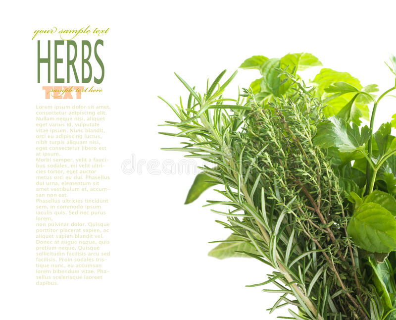 Herbs with copyspace. Variety of fresh herbs with copyspace isolated on white stock images