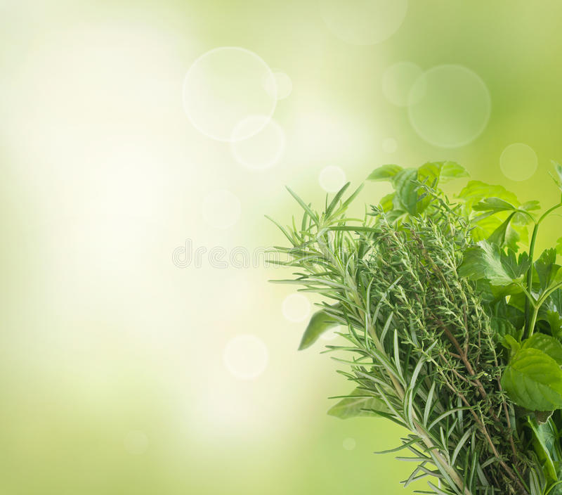 Herbs with copyspace. Variety of fresh herbs with copyspace isolated on white royalty free stock photos