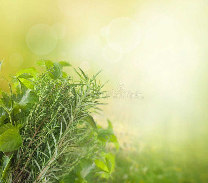 Herbs with copyspace. Variety of fresh herbs in the garden with bokeh lights royalty free stock photo