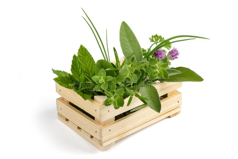 Herbs in a crate royalty free stock image