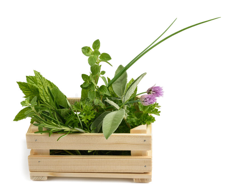 Herbs in a crate royalty free stock images