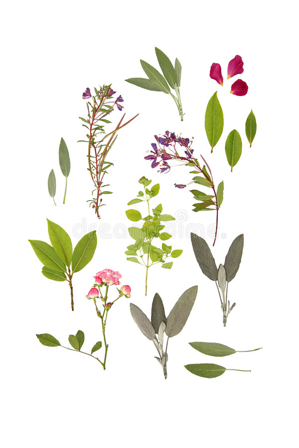 Download Herbs And Flowers Of Summer Stock Image - Image: 4150285