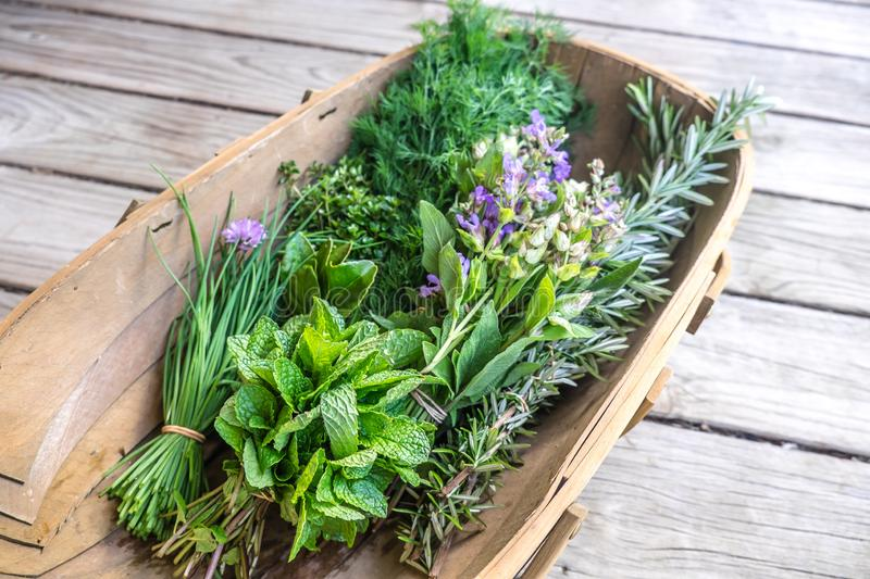 Herbs fresh from kitchen garden in harvest basket: chives, mint, thyme, rosemary, dill, sage with edible purple flowers royalty free stock photography