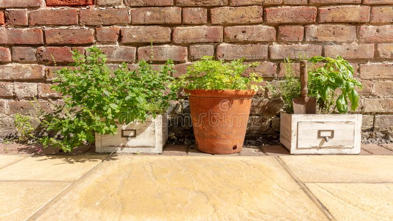 Herbs Growing in the Garden royalty free stock photo