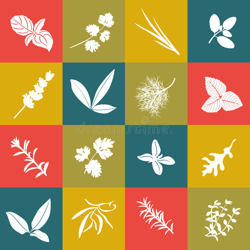 Herbs hand drawn vector big icon squared set royalty free illustration