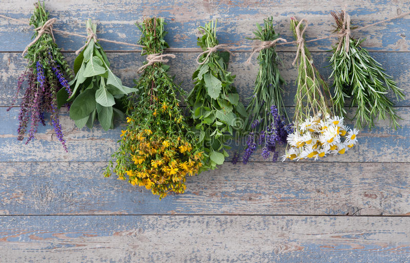 Herbs hanging on a leash stock photos