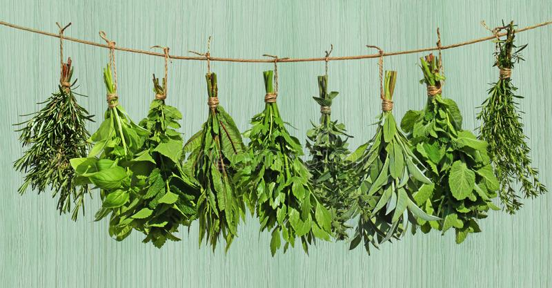 Herbs hanging from rope royalty free stock images